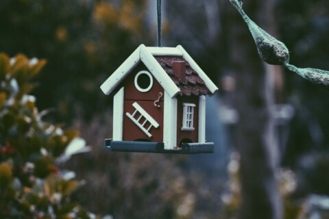 Birdhouse hanging from the trees