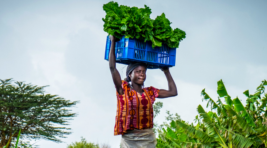 More than a dozen Brandeis International Business School students and recent grads helped a local startup connect farmers in Ghana with financial lenders.