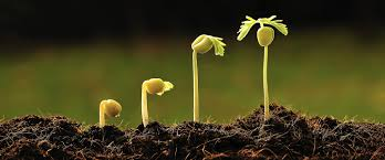 BIO 230 – Plant Biology