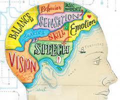 PSY 251 – Physiological Psychology