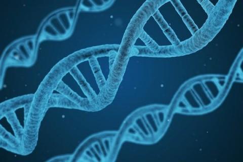 BIO 102 Human Biology – Health & Disease