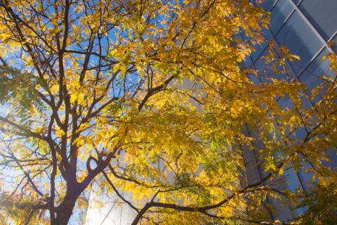Sunlight through trees at MIT's campus.