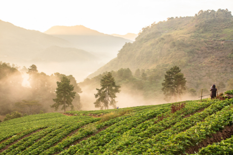 ATTRA Sustainable Agriculture Internships