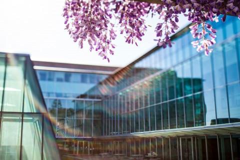 Sunny Campus Shots