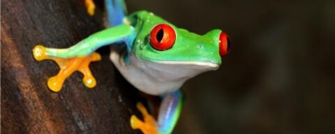tree-frog_stsk