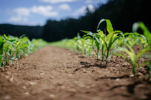 PAG 115:  Introduction to Precision Agriculture