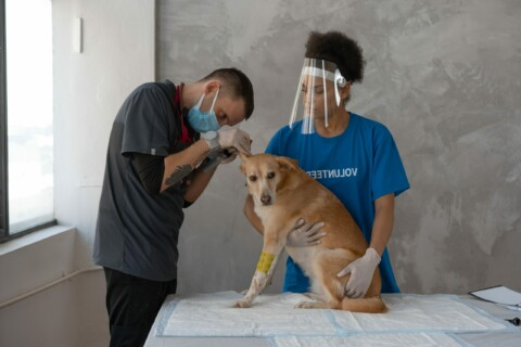 VETS 101: Student Success Techniques: Veterinary Technology