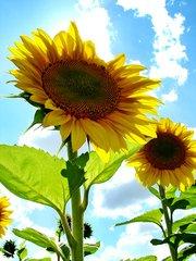 sun-kissed-flower-1410251