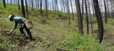 Reforestation Nation