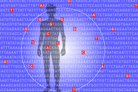 CAS 420 01: Cracking the Code of Life – Exploring the Human Genome