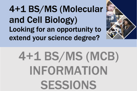4+1 Info session