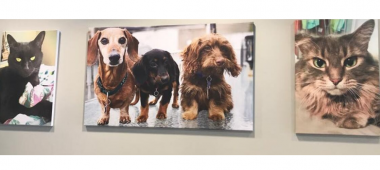 Animal Specialty Center