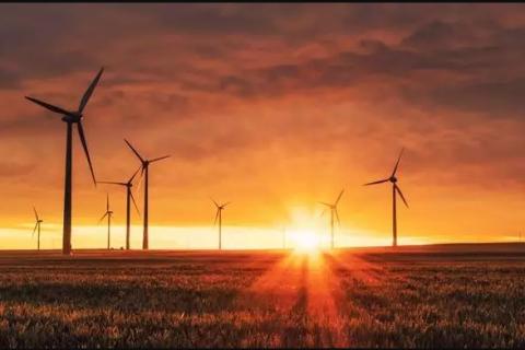 field of wind turbines at sunset