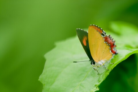 butterfly-1362629