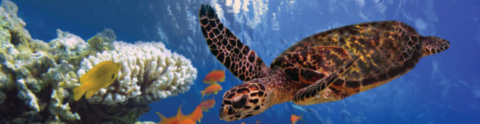 Tropical Marine Ecology in Belize