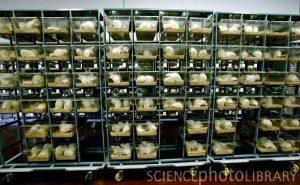rat cages