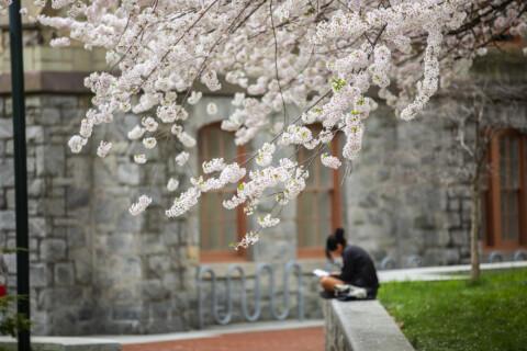 Study Blossom